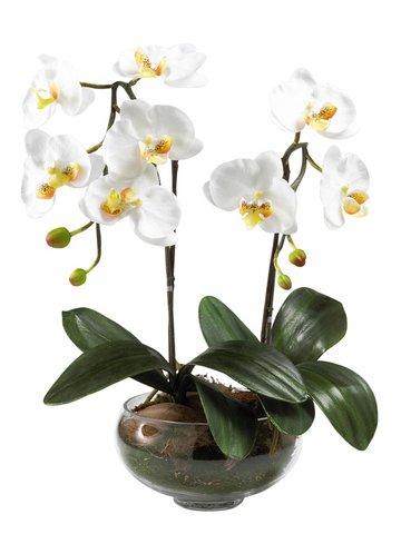 orchidee blume 48 36 30 weiss glas schale vase kunstblume deko neu ebay. Black Bedroom Furniture Sets. Home Design Ideas